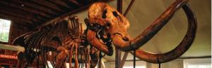 Mastodon Mega-Mixer @ Museum Village